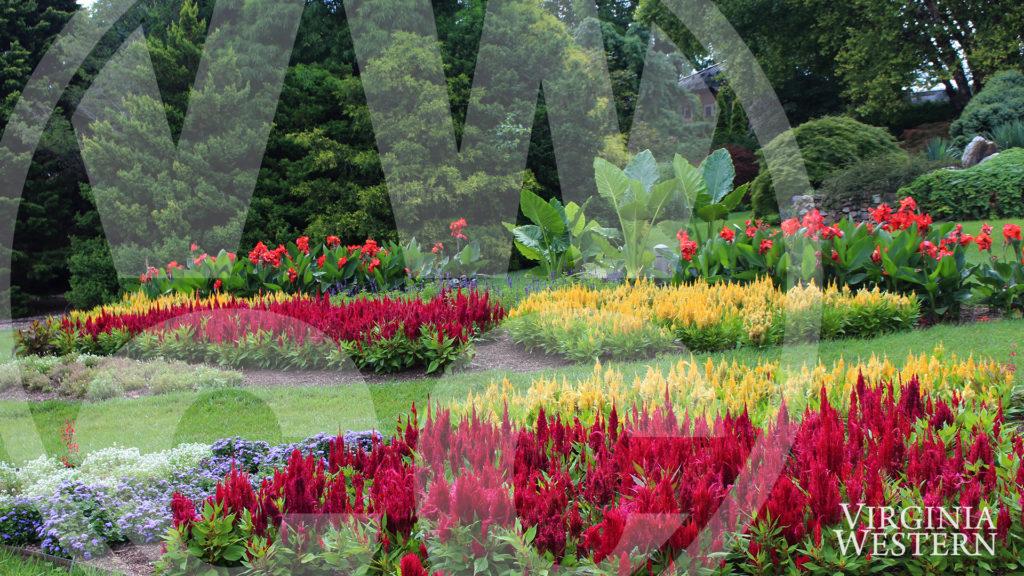 Zoom Background - Arboretum